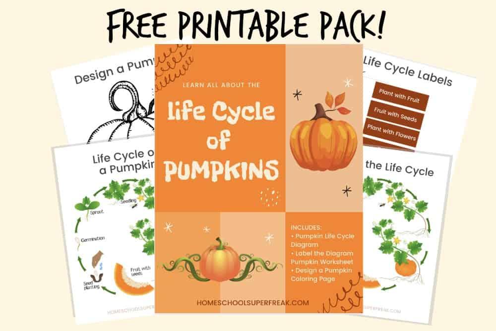 FREE Pumpkin Life Cycle Worksheet Printable Pack