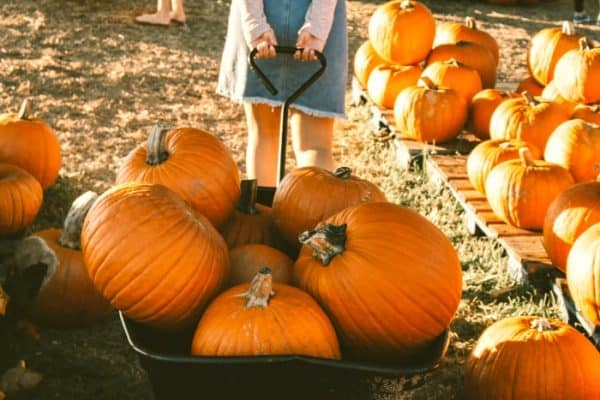 Is Pumpkin A Fruit: All About Pumpkins For Kids