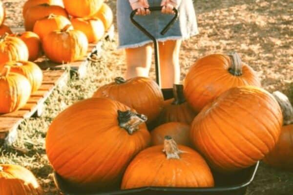 Is pumpkin a fruit kids doing pumpkin activities in pumpkin patch